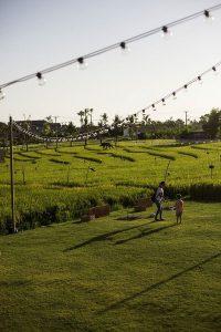 Pemandangan alam di Parachute Bali